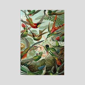 Vintage Haeckel Hummingbirds Rectangle Magnet