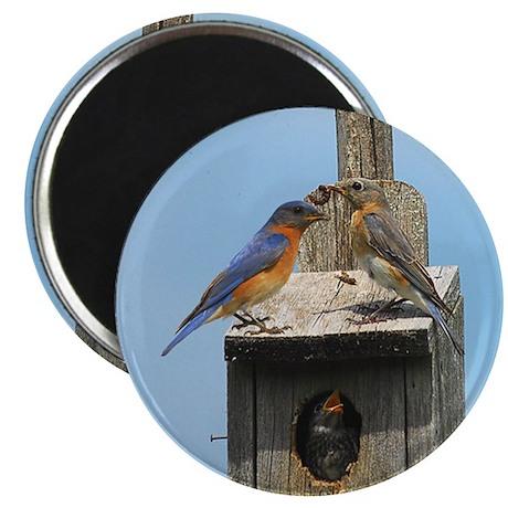 Bluebird Family Magnet