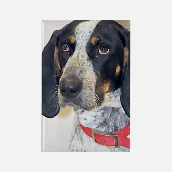 Bluetick Coonhound Rectangle Magnet