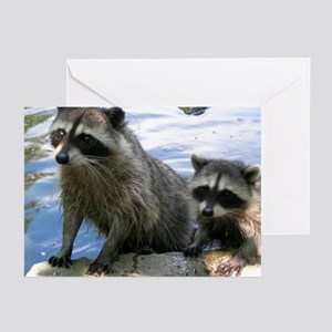 Racoon Buddies Greeting Cards (Pk of 10)