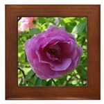Antique Rose Framed Tile