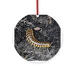 Millipede Ornament (Round)