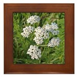 Wild Yarrow Framed Tile