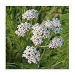 Wild Yarrow Tile Coaster
