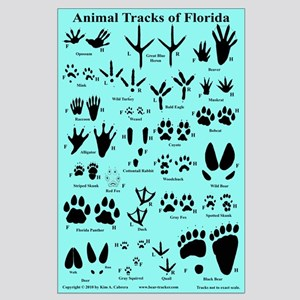 Animal Tracks Florida Lt. Blue Large Poster