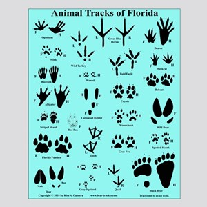 Florida Animal Tracks Blue Small Poster