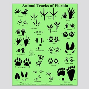 Florida Animal Tracks Green Small Poster