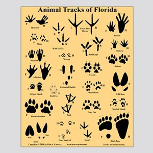 Florida Animal Tracks Orange Small Poster
