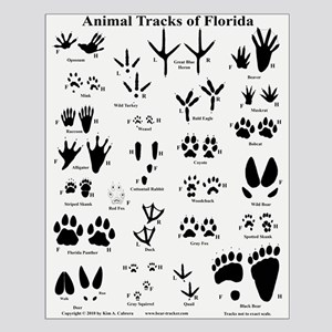 Florida Animal Tracks Off-white Small Poster