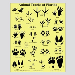 Florida Animal Tracks Tan Small Poster