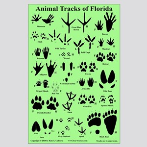 Animal Tracks Florida Lt. Green Large Poster