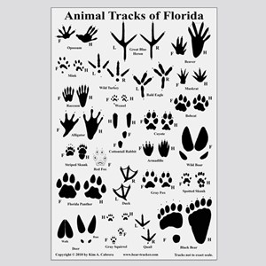 Animal Tracks Florida Off-white Large Poster