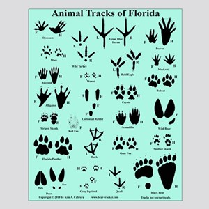 Animal Tracks of Florida Blue Small Poster