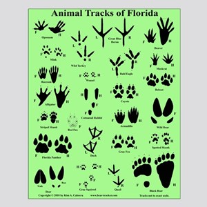 Animal Tracks of Florida Green Small Poster