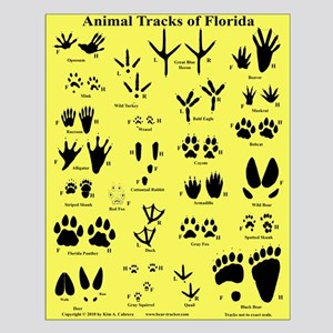 Animal Tracks of Florida Orange Small Poster