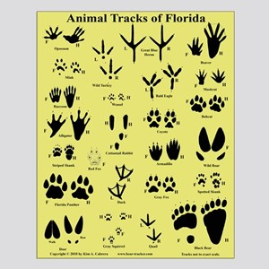 Animal Tracks of Florida Tan Small Poster