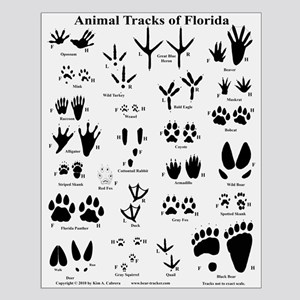 Animal Tracks of Florida Off-white Small Poster