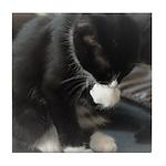 Tuxedo Kitten Tile Coaster