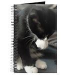 Tuxedo Kitten Journal