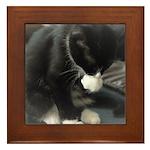 Tuxedo Kitten Framed Tile
