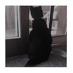 Black Cat at Screen Door Tile Coaster