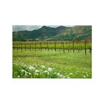 Silverado Trail Vineyard Photography Magnet
