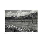 Silverado Trail Black + White Magnets (100)