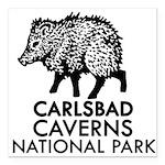 Carlsbad Caverns National Park Javelina Square Car