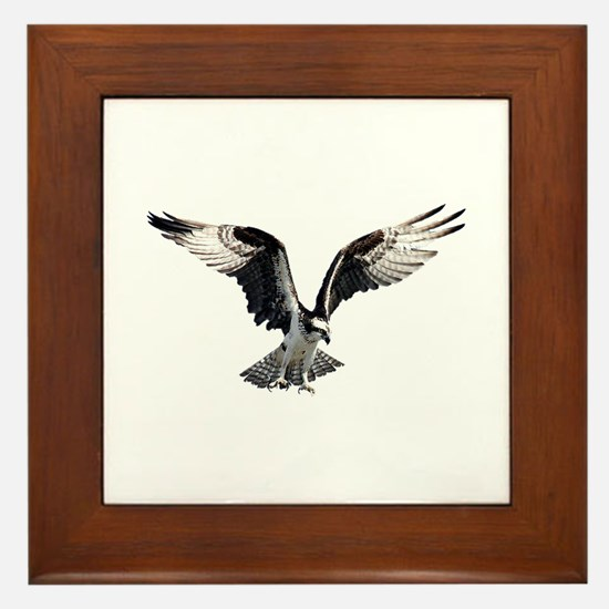 Osprey in Flight Framed Tile