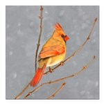 Cardinal on Branch Square Car Magnet 3