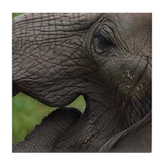 Elephant 3 Tile Coaster