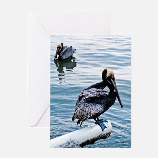 Save our Pelicans: Greeting Card