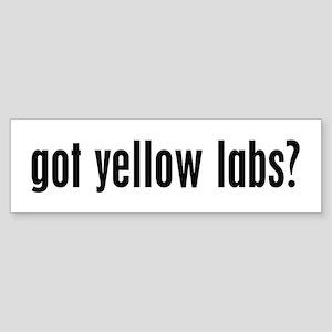 Got Yellow Labs? Bumper Sticker