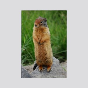Squirrelly Hello Rectangle Magnet