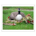 Love Canada Geese Small Poster