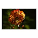 Columbia Lily Sticker (Rectangle 10 pk)