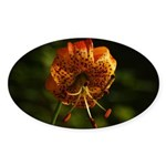 Columbia Lily Sticker (Oval)