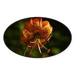 Columbia Lily Sticker (Oval 10 pk)