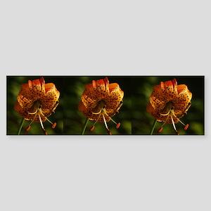 Columbia Lily Sticker (Bumper)