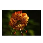 Columbia Lily Postcards (Package of 8)