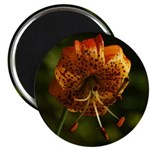 Columbia Lily Magnet