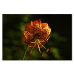 Columbia Lily Large Poster
