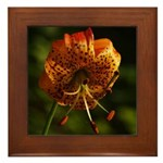Columbia Lily Framed Tile