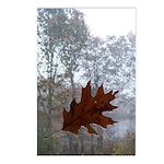 wet leaf Postcards (Package of 8)