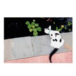 cat and pond Postcards (Package of 8)