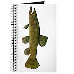 Amazon Wolf fish Trahira Journal
