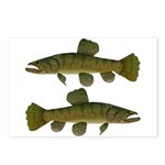 Amazon Wolf fish Trahira Postcards (Package of 8)
