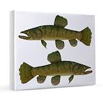 Amazon Wolf fish Trahira 20x24 Canvas Print