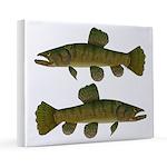 Amazon Wolf fish Trahira 16x20 Canvas Print