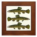 Amazon Wolf fish Trahira Framed Tile
